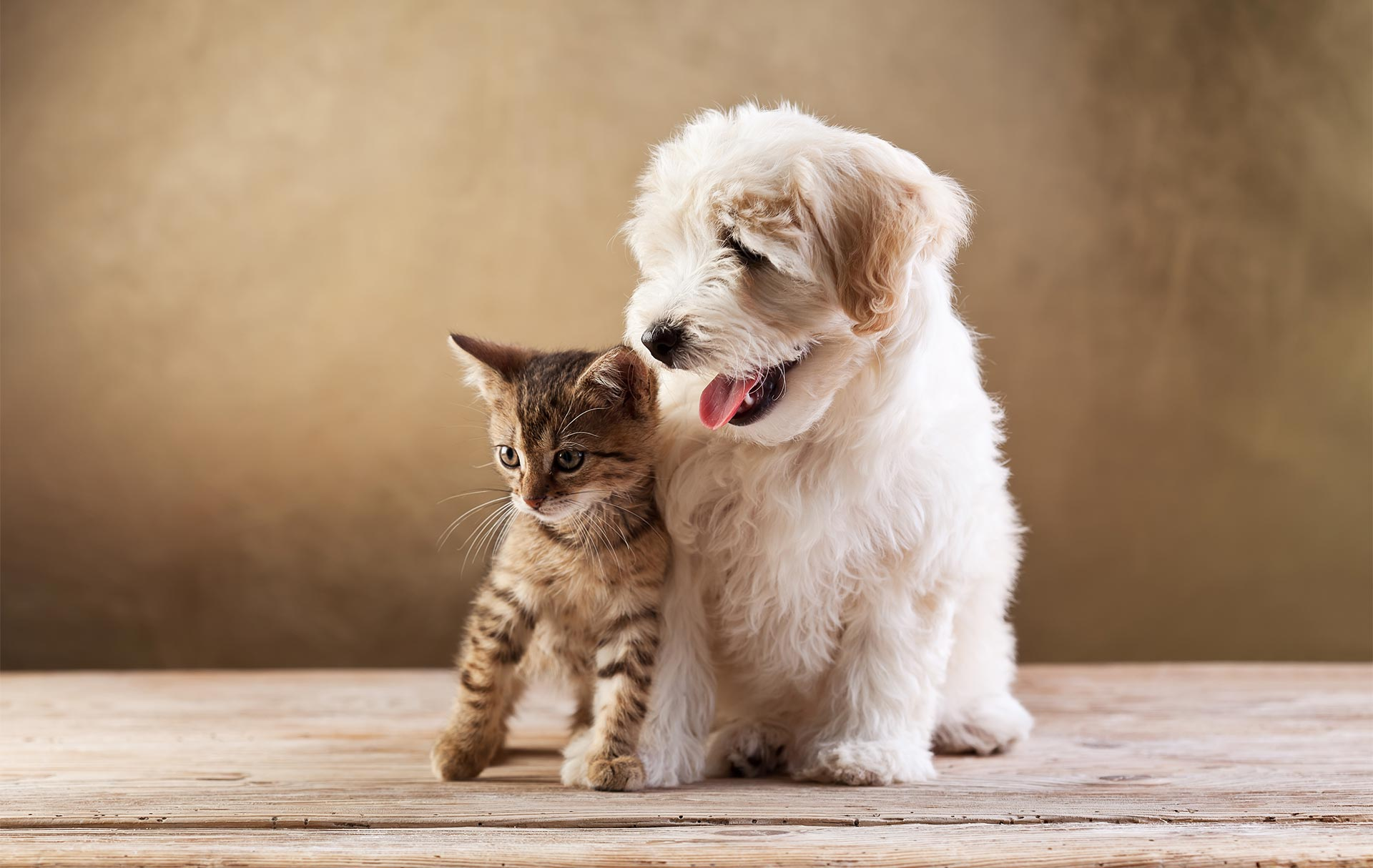 7 Mistakes To Avoid When Purchasing Pet Insurance