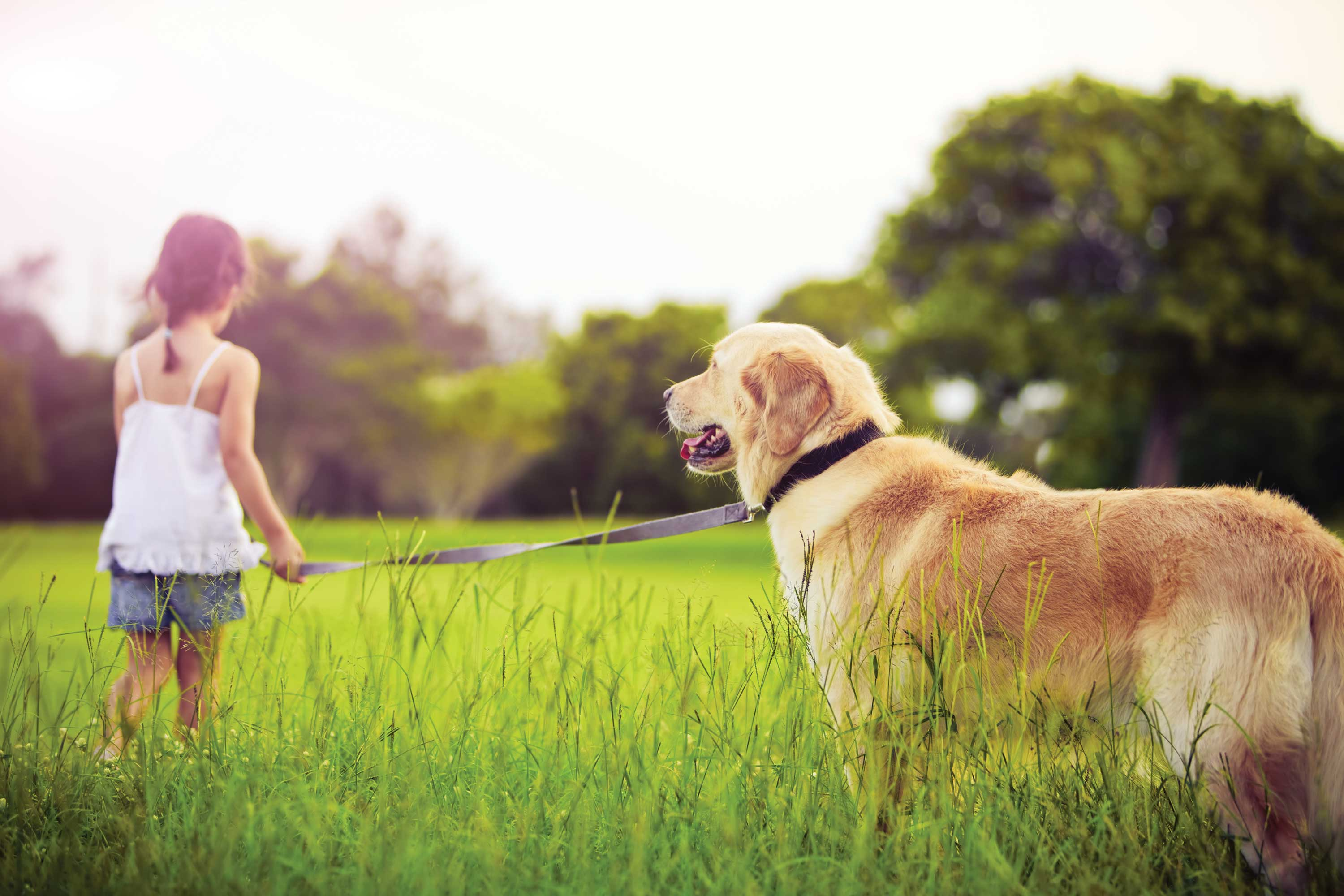 Factors to Consider Before Getting Pet Insurance